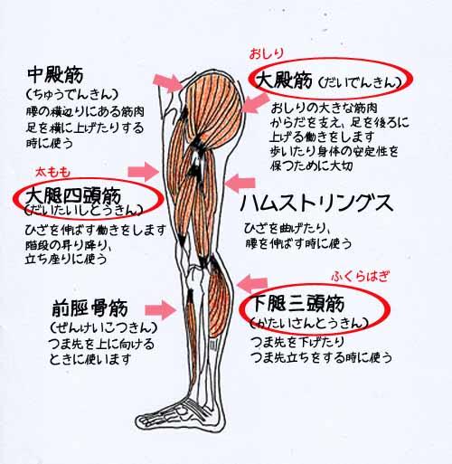 鍛えよう筋肉.jpg