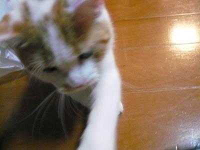 安猫 001.jpg