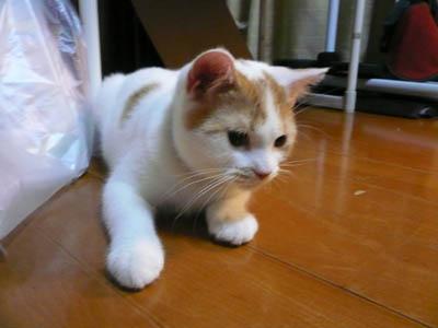 安猫 004.jpg