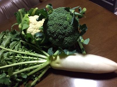 採れ立て野菜.jpg